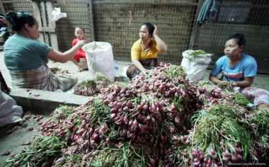\Bawang Merah Impor Ilegal Marak, Petani Lokal Merugi\