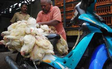 \Kebijakan Kementan Picu Praktek Kartel Ayam\