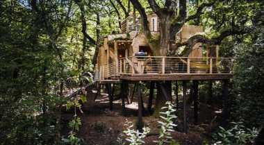 \Rumah Pohon di Inggris Usung Konsep Keberlanjutan dan Mewah\