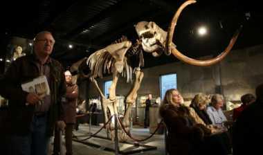 Peneliti Akan Hidupkan Kembali Gajah Purba