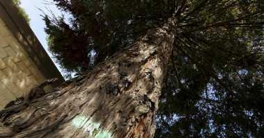 Peneliti Manfaatkan Satelit Telusuri Penggundulan Hutan