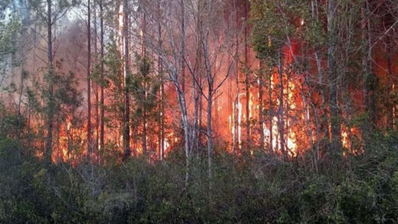 Konyol! Berniat Bakar Buku Bekas, Pria Ini Justru Picu Kebakaran Hutan