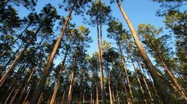 \BUSINESS HITS: Hutan Disiapkan Jadi Sumber Energi Terbarukan\