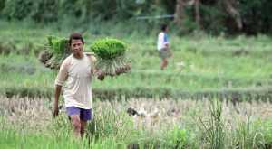 241 Desa Tak Terima Dana, Jokowi: Tahun Ini untuk Pertanian hingga UMKM