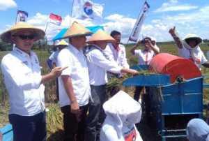 Petani Lampung Timur Panen Raya Bersama Partai Perindo