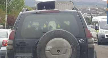 Wah, Toyota Land Cruiser Ini Angkut 3 Sapi