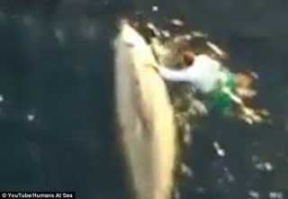 VIDEO: Hebat! Pria Ini Rela Terjun ke Laut demi Selamatkan Seekor Paus