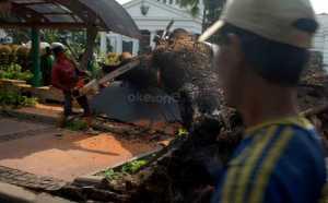 Pohon Tumbang Akibat Hujan Disertai Angin Kencang di Bandung, Dua Mobil Tertimpa