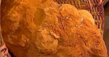 Tertimbun 70 Juta Tahun, Telur Dinosaurus ditemukan di China