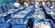 Indonesia Dorong Transparansi Pengelolaan Perikanan di Dunia
