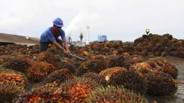 \Beban Penjualan Menurun, Sampoerna Agro Cetak Laba Bersih Rp157 Miliar\