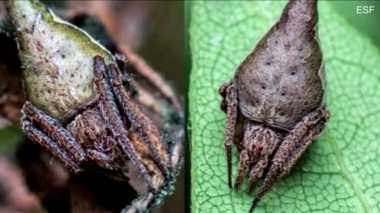 Waduh, Ilmuwan Ungkap 10 Spesies Baru yang Terancam Punah