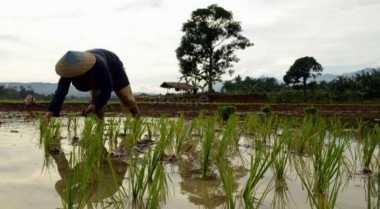 \Maksimalkan Lahan yang Ada, Petani Tadah Hujan Tingkatkan Produksinya\