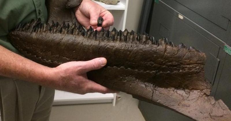 Peneliti Temukan Fosil Dinosaurus Berusia 68 Juta Tahun