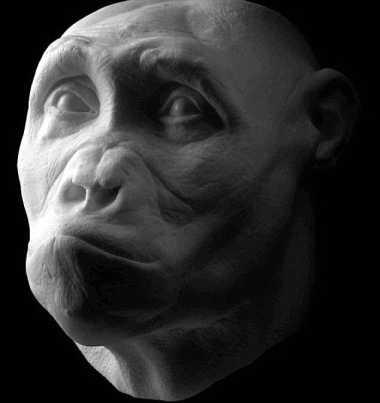 Wow, Peneliti Temukan Fosil Nenek Moyang Berusia 7,2 Juta Tahun