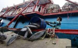 BUSINESS HITS: Mantap! Sulut Ekspor Ikan Kayu ke AS hingga Jepang