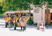 <i>Yuk</i> Coba Naik Cidomo, Taksinya Gili Trawangan Lombok