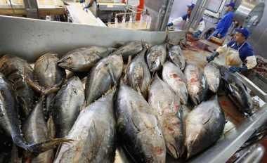 \Masuki Bulan Ramadan, Harga Ikan Naik Rp1.000/Hari   \