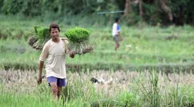 \Aduh! Jumlah Petani Indonesia Turun, Beralih Jadi TKI\