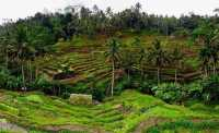 SHARE LOC: Jalan-Jalan di Ubud Rasanya Enggan untuk Kembali Pulang