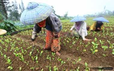\Lindungi Petani Kecil, Indonesia Desak WTO Sepakati Perdagangan Global\