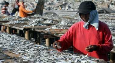 \Buntut Garam Mahal, Ikan Asin Kini Langka!\
