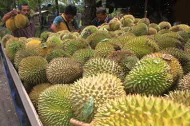 \Gawat! Harga Durian Termahal dalam 33 Tahun Terakhir, Tembus hingga Rp2,5 Juta\