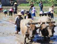 SHARE LOC: Stres dengan Suasana Perkotaan, Yuk ke Desa Candran di Yogyakarta yang Bikin Adem!
