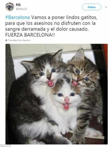 Ada-Ada Saja! Tragedi Barcelona, Netizen Malah Gemakan Tweet Foto Kucing