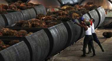 \Wih, Ekspor Minyak Kelapa Sulawesi Utara Sumbang Devisa Rp322,5 Miliar\