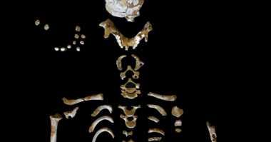 Tengkorak Anak Neanderthal Ungkap Evolusi Manusia, Benarkah?