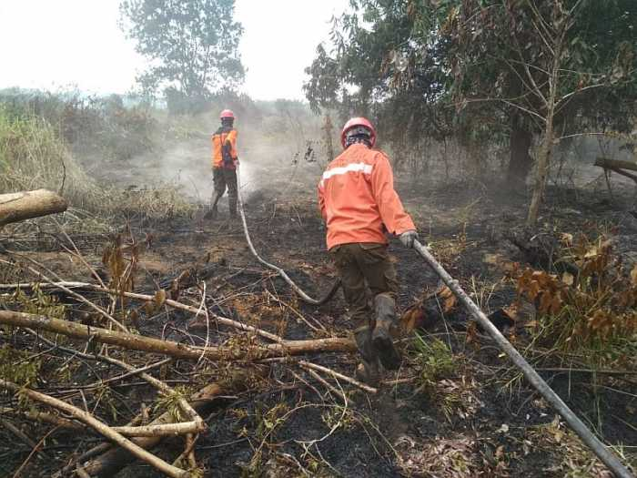 BNPB : Solusi Pemadaman Karhutla Harus Permanen