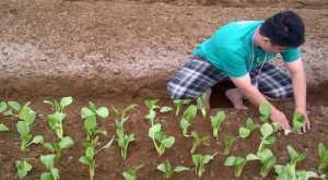 Hadapi Covid-19, Greenhouse hingga Open Field Jadi Inovasi di Sektor Pertanian