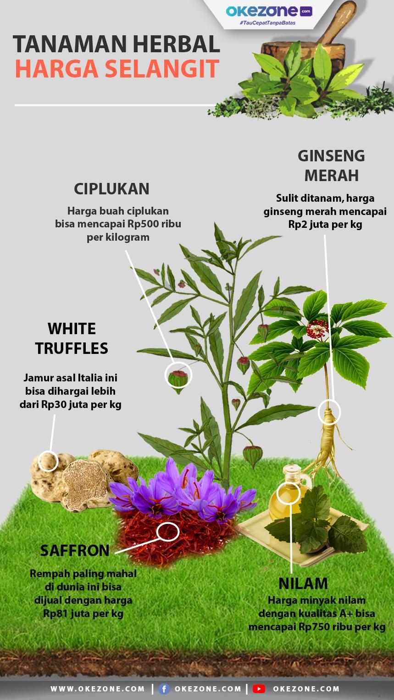 Tanaman Herbal dengan Harga Selangit -
