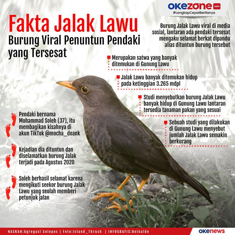 Fakta Jalak Lawu, Burung Viral Penuntun Pendaki yang Tersesat -