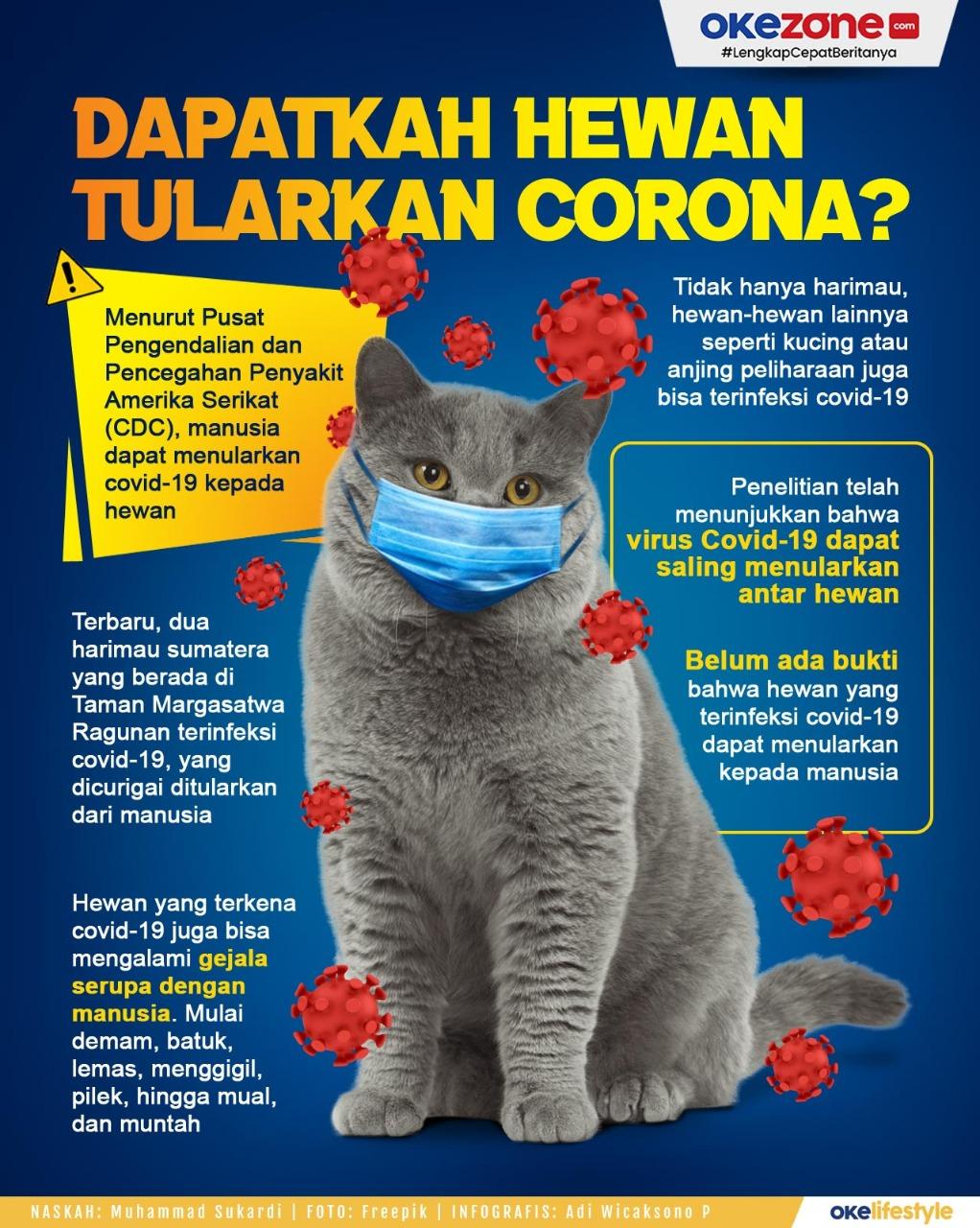 Dapatkah Hewan Tularkan Corona? -
