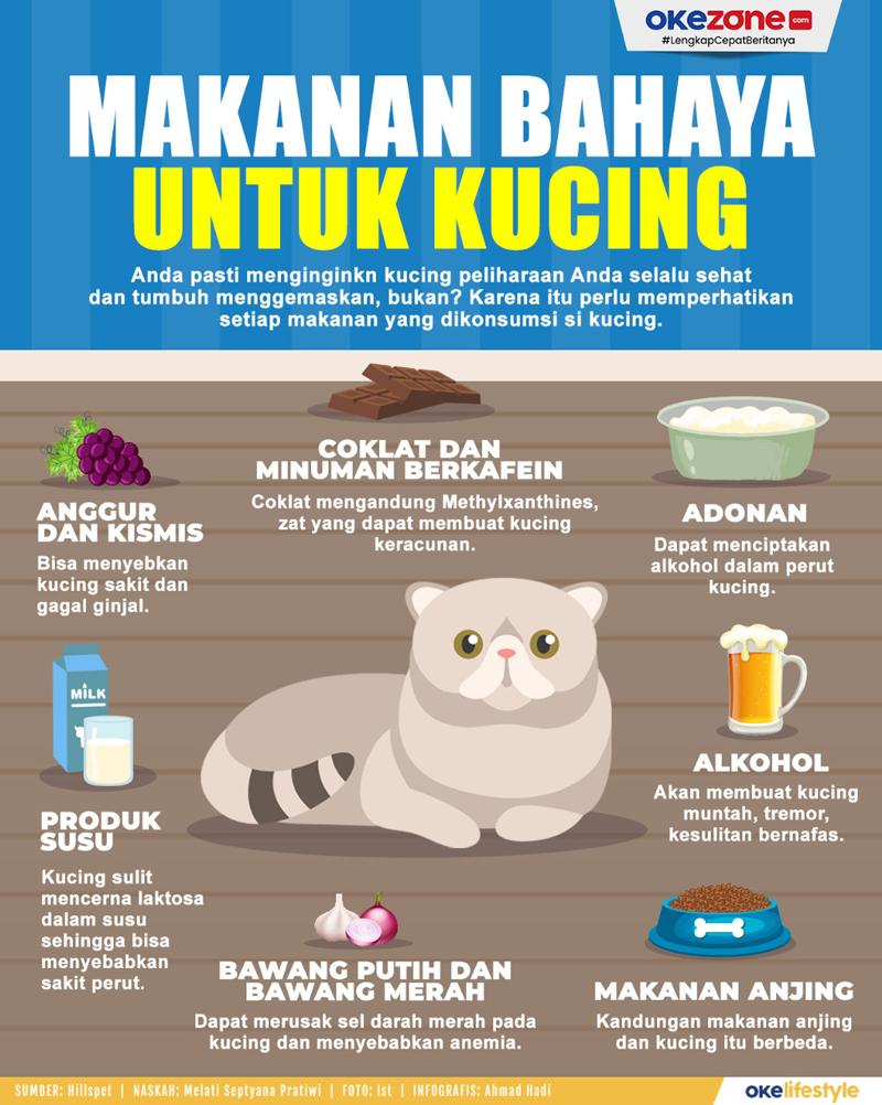 Makanan Bahaya Untuk Kucing -