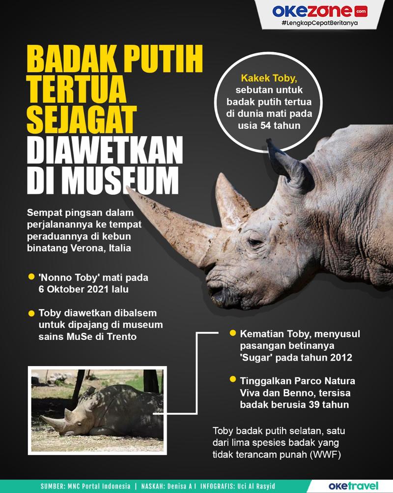 Badak Putih Tertua Sejagat Diawetkan di Museum -