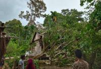 Hujan Angin, 1 Orang di Aceh Selatan Tewas Tertimpa Pohon