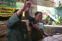 BKSDA Pastikan Lutung Jawa yang Mati Tinggal di Hutan Lindung Gunung Butak