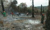 2 Hektare Lahan Sawit Milik Warga Kebakaran