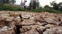 Memasuki Musim Kemarau BMKG Imbau Petani Waspadai Hama