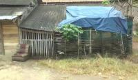 Viral, Satu Keluarga di Cilegon Hidup Satu Gubuk Bersama Belasan Ayam