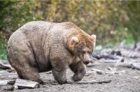 Pekerja Taman Margasatwa China Tewas Diserang Beruang di Depan Pengunjung