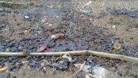 Cairan Hitam Diduga Minyak Mentah Cemari Pantai Indramayu