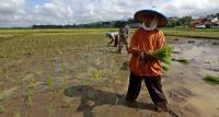 Peran Petani Sangat Penting di Tengah Pandemi
