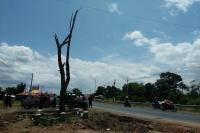 Imbas Proyek Pelebaran Jalan, Pohon Jati Tanpa Daun Dipindahkan