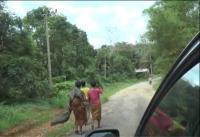 Takut Covid-19, Suku Anak Dalam Berbondong Kembali ke Hutan