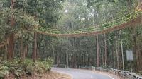 Unik, India Bangun Jembatan Khusus Bagi Hewan Reptil