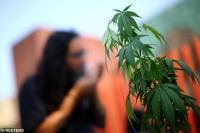 PBB Hapus Ganja dari Daftar Obat Paling Berbahaya di Dunia